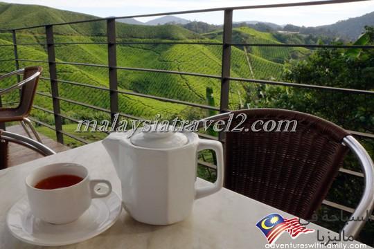 امزارع الشاي3
