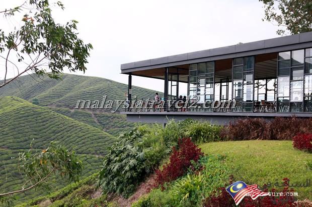 امزارع الشاي6