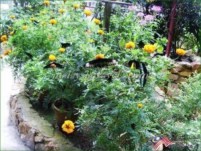 حديقة الفراشات1