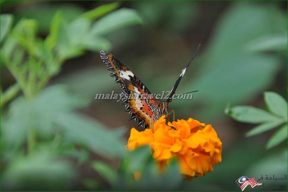 حديقة الفراشات2