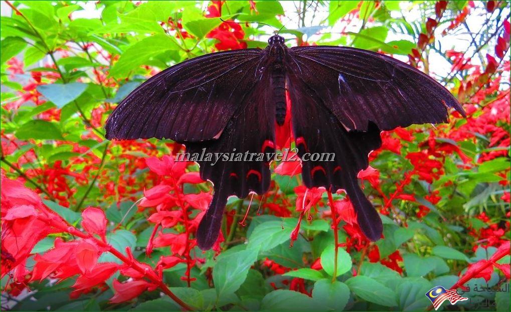 حديقة الفراشات3