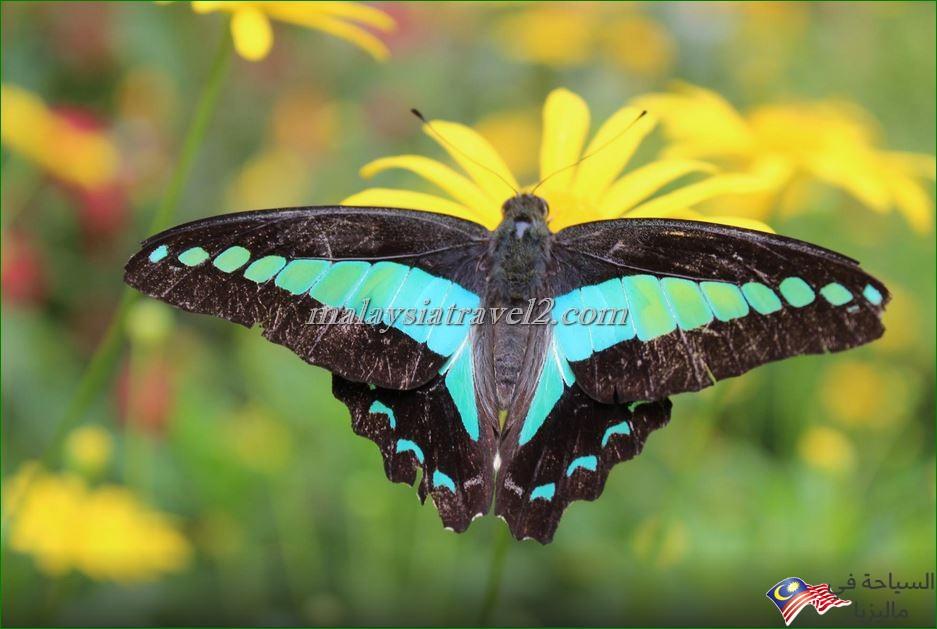 حديقة الفراشات4