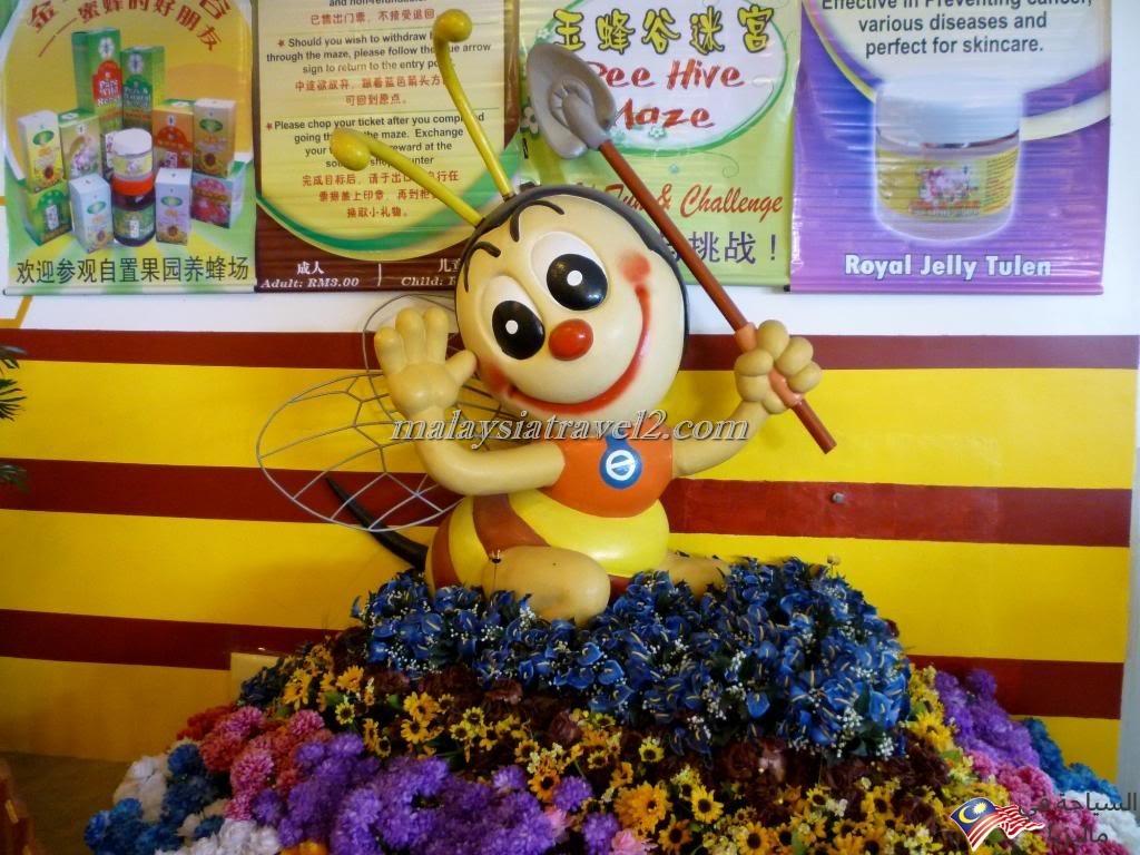 مزارع العسل10