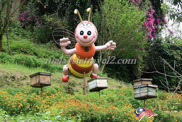 مزارع العسل12