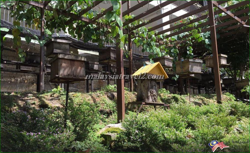 مزارع العسل2