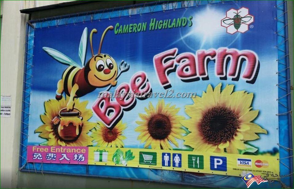مزارع العسل4