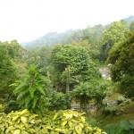 جمال الطبيعة في هضبة بينانج