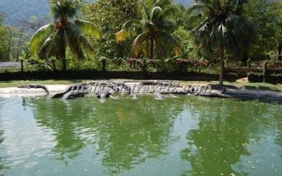 حديقة التماسيح في لنكاوي13