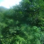 صور من القطار على الجبل في هضبة بينانج