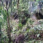 صور من الجبل في هضبة بينانج