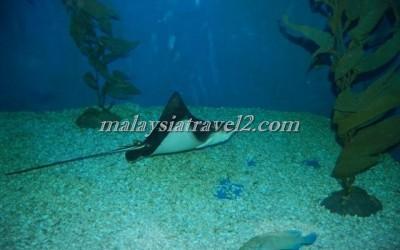 مركز عالم تحت الماءUnderwater World Langkawi12