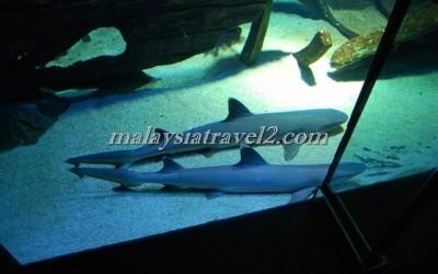 مركز عالم تحت الماءUnderwater World Langkawi13