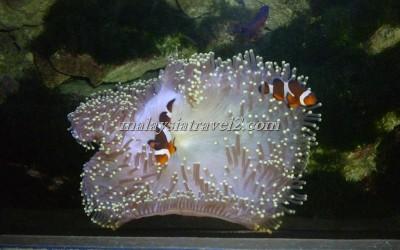 مركز عالم تحت الماءUnderwater World Langkawi3