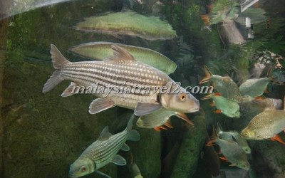 مركز عالم تحت الماءUnderwater World Langkawi6