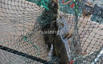 مزرعه الاسماك في رحله المانقروف في لنكاوي5