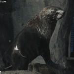 حيوان في عالم تحت الماء في لنكاوي