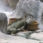 زواحف في عالم تحت الماء في لنكاوي