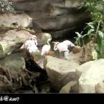 مجموعة من طيور الفلامينقو في عالم تحت الماء في لنكاوي