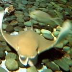 كائنات بحرية في عالم تحت الماء في لنكاوي
