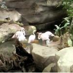 طائر الفلامينقو في عالم تحت الماء في لنكاوي
