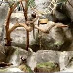 مجموعة من الطيور في عالم تحت الماء في لنكاوي
