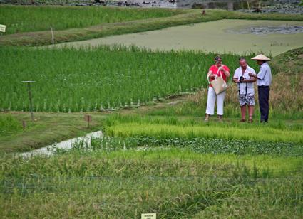 Laman Padi Langkawi Langkawi Rice Museum لامان بادي لنكاوي