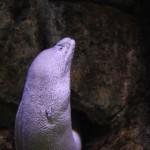 سمكة عجيبة في عالم تحت الماء في لنكاوي