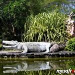 حديقة ليجندا Taman LAGANEDA PARK لنكاوي