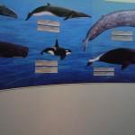 لوحة معلومات في عالم تحت الماء في لنكاوي