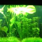 نباتات بحرية في عالم تحت الماء في لنكاوي