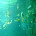مجموعة اسماك في عالم تحت الماء في لنكاوي