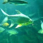 اسماك رائعة في عالم تحت الماء في لنكاوي