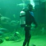 غواص ينظف احد الاحواض في عالم تحت الماء في لنكاوي