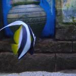 سمكة ملونه في عالم تحت الماء في لنكاوي