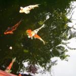 اسماك ملونه في عالم تحت الماء في لنكاوي