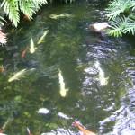 اسماك في البحيره في عالم تحت الماء في لنكاوي