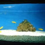 اسماك في عالم تحت الماء في لنكاوي