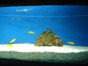 اسماك في عالم تحت الماء في