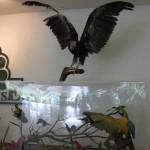 مجموعة محنطة حديقة الطيور في جزيرة لنكاوي ماليزيا