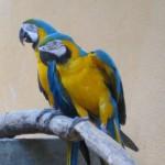 البغبغاء حديقة الطيور في جزيرة لنكاوي ماليزيا
