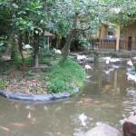 الفلامينقو حديقة الطيور في جزيرة لنكاوي ماليزيا