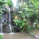 شلالات داخل الحديقه حديقة الطيور في جزيرة لنكاوي ماليزيا