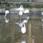 طائر الفلامينقو حديقة الطيور في جزيرة لنكاوي ماليزيا