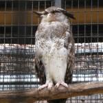 البومة حديقة الطيور في جزيرة لنكاوي ماليزيا