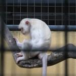 قرود حديقة الطيور في جزيرة لنكاوي ماليزيا