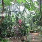 الحديقة الستوائية حديقة الطيور في جزيرة لنكاوي ماليزيا