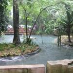 بحيرة في الحديقة الاستوائية حديقة الطيور في جزيرة لنكاوي ماليزيا