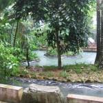 الغابة الاستوائية حديقة الطيور في جزيرة لنكاوي ماليزيا