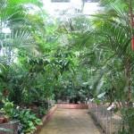 الحديقة الاستوائية حديقة الطيور في جزيرة لنكاوي ماليزيا