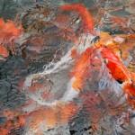 بحيرة الاسماك حديقة الطيور في جزيرة لنكاوي ماليزيا